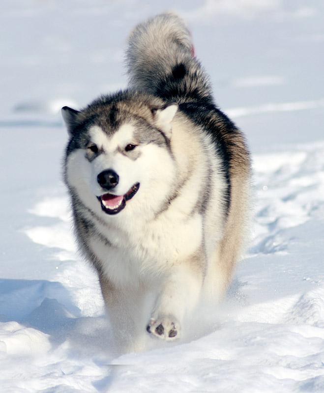 Такие разные породы собак часть 2