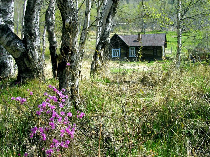 Дома на опушке леса фото