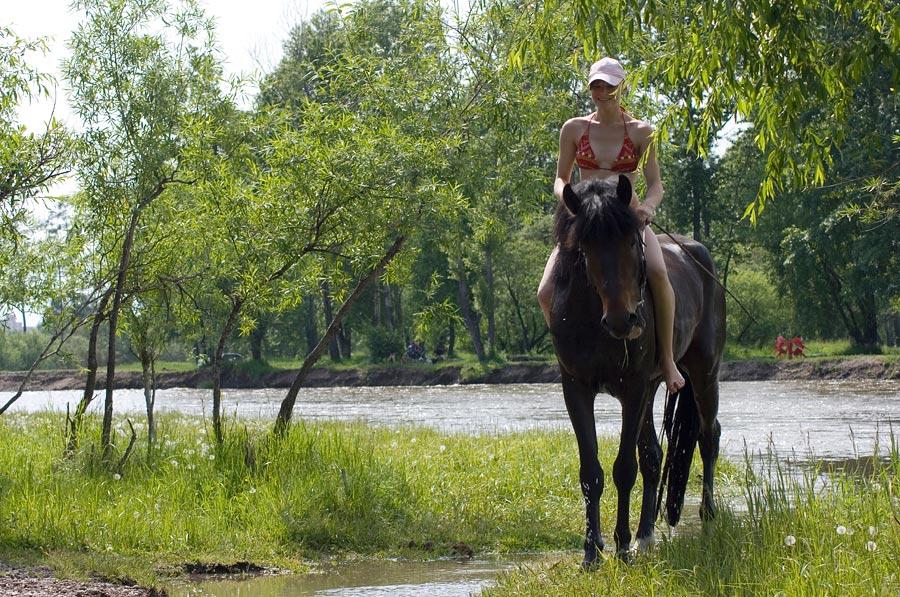 Картинки лошади летом