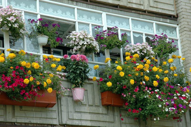 Озеленение балконов в москве. - остекление лоджий - каталог .