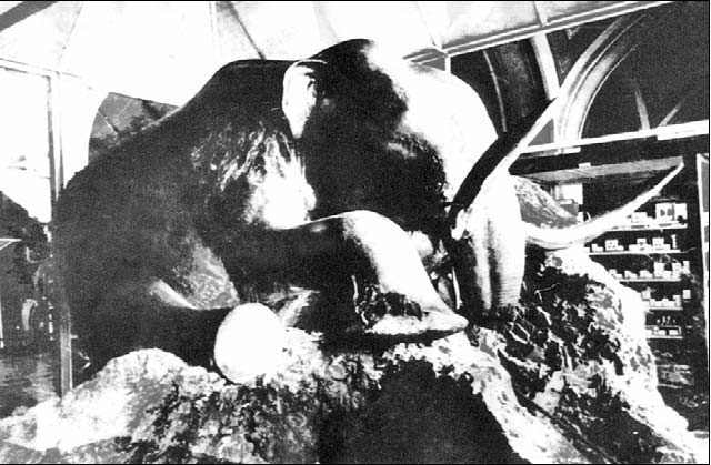 Картинки по запросу Мамонт березовский, березовский мамонт фото